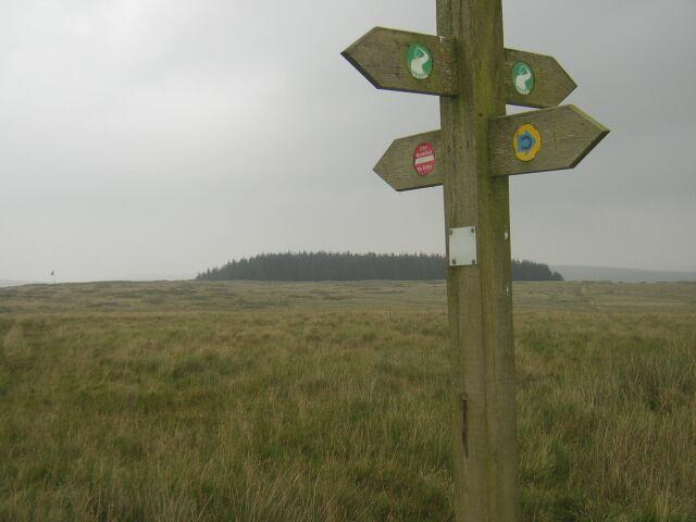 Footpath_direction_post_in_Sennybridge_Training_Area_-_geograph_org_uk_-_945321